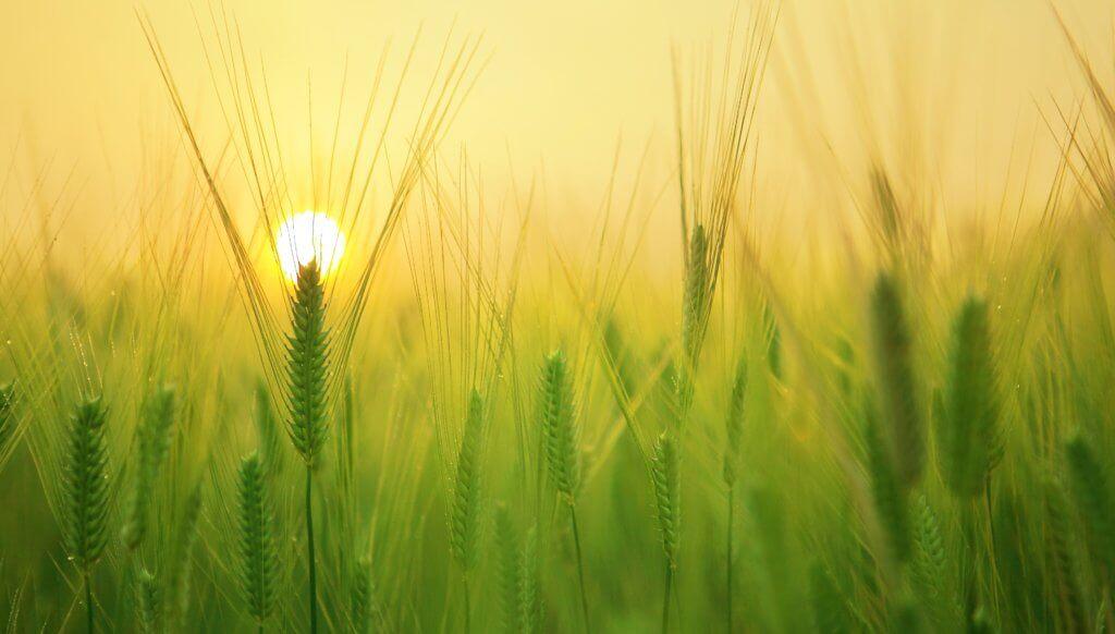 Absatzfinanzierung in der Landwirtschaft